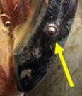FAQ - Flexx® Urethane Horsehoes