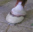 Series III cuff & egg bar shoe