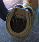 Bar Shoe Construction