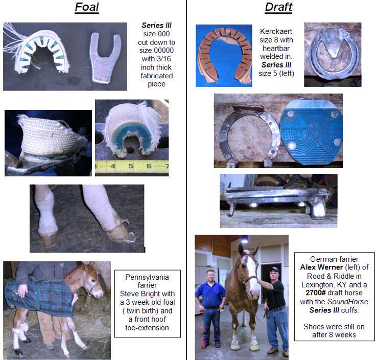 Foal or Draft Horse