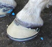 horseshoeattachment2[1]