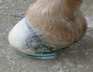 No glue on the bottom of the hoof