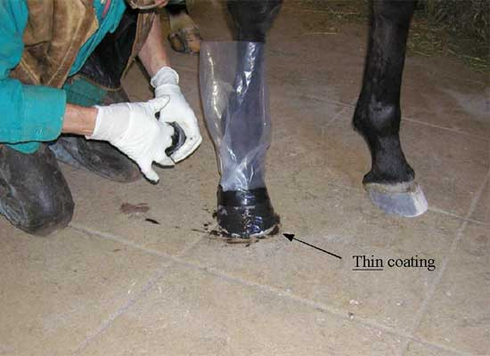 "3. ""Wet Out"" Hoof with Adhesive"